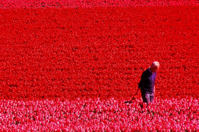 Man walking through field of flowers